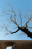Πέτρινος τοίχος με ένα νεκρό δέντρο, ενάντια στον ουρανό Στοκ Εικόνα