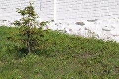 Πέτρινος τοίχος με την πρασινάδα Σύσταση της φύσης Υπόβαθρο για το κείμενο, έμβλημα, ετικέτα Στοκ φωτογραφίες με δικαίωμα ελεύθερης χρήσης