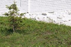 Πέτρινος τοίχος με την πρασινάδα Σύσταση της φύσης Υπόβαθρο για το κείμενο, έμβλημα, ετικέτα Στοκ Φωτογραφίες