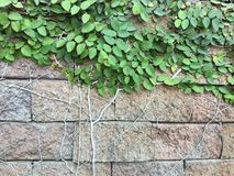 Πέτρινος τοίχος με τη φύση Στοκ εικόνα με δικαίωμα ελεύθερης χρήσης