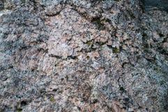 Πέτρινος τοίχος με το βρύο Στοκ εικόνα με δικαίωμα ελεύθερης χρήσης