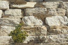 Πέτρινος τοίχος λ στοκ εικόνα με δικαίωμα ελεύθερης χρήσης