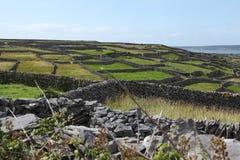 Πέτρινος φράκτης στο νησί inisheer στα aran νησιά στην Ιρλανδία Στοκ Εικόνα