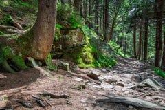Πέτρινο ίχνος βουνών στο δάσος Στοκ φωτογραφία με δικαίωμα ελεύθερης χρήσης