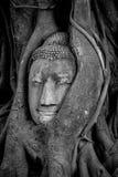 Πέτρινο κεφάλι του Βούδα Στοκ φωτογραφία με δικαίωμα ελεύθερης χρήσης