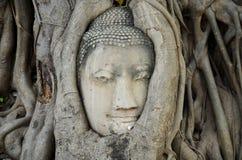 Πέτρινο κεφάλι του Βούδα στο δέντρο ρίζας Wat Mahathat Στοκ Φωτογραφίες