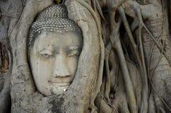 Πέτρινο κεφάλι του Βούδα στο δέντρο ρίζας Wat Mahathat Στοκ εικόνες με δικαίωμα ελεύθερης χρήσης