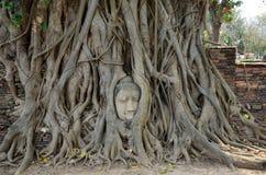 Πέτρινο κεφάλι του Βούδα στο δέντρο ρίζας Wat Mahathat Στοκ Εικόνες