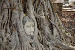 Πέτρινο κεφάλι του Βούδα στο δέντρο ρίζας Wat Mahathat Στοκ Φωτογραφία