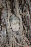 Πέτρινο κεφάλι του Βούδα στο δέντρο ρίζας Wat Mahathat Στοκ φωτογραφίες με δικαίωμα ελεύθερης χρήσης
