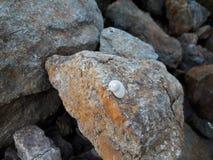 Πέτρινο κοχύλι Στοκ Φωτογραφία