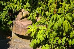 Πέτρινο πουλί στον κήπο Στοκ Εικόνα