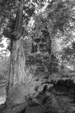 Πέτρινο πρόσωπο στη ζούγκλα, Angkor Wat, Καμπότζη Στοκ Εικόνες