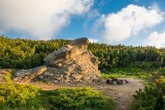 Πέτρινο τέρας στους θάμνους στοκ εικόνες με δικαίωμα ελεύθερης χρήσης