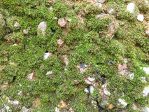 Πέτρινο υπόβαθρο με το βρύο Στοκ Φωτογραφίες