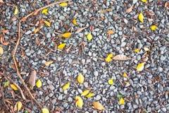 Πέτρινο driveway αμμοχάλικο που αναμιγνύεται με τα φύλλα στοκ εικόνες με δικαίωμα ελεύθερης χρήσης