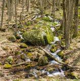 Πέφτοντας απότομα καταρράκτες βουνών στα ξύλα Στοκ Φωτογραφίες