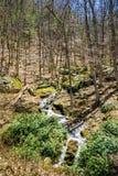 Πέφτοντας απότομα καταρράκτες βουνών στα ξύλα Στοκ φωτογραφίες με δικαίωμα ελεύθερης χρήσης