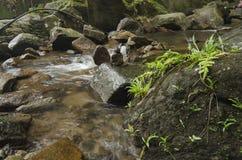 Πέφτοντας απότομα τροπικός καταρράκτης υγρός και mossy βράχος, που περιβάλλεται από το πράσινο τροπικό δάσος Στοκ Φωτογραφία