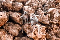 πίθηκοι δύο Στοκ εικόνες με δικαίωμα ελεύθερης χρήσης