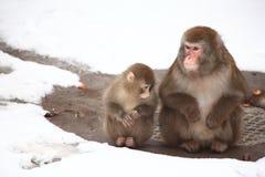 πίθηκοι ζωολογικός κήπος δύο χειμώνα Στοκ εικόνα με δικαίωμα ελεύθερης χρήσης
