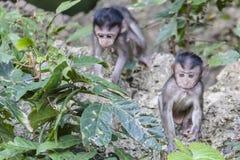 Πίθηκοι μωρών Στοκ φωτογραφία με δικαίωμα ελεύθερης χρήσης