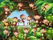 Πίθηκοι που ζουν στο δάσος Στοκ φωτογραφία με δικαίωμα ελεύθερης χρήσης