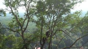 Πίθηκοι που κάθονται στο δέντρο στο ναό σπηλιών τιγρών σε Krabi απόθεμα βίντεο