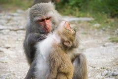 Πίθηκοι σε Shoushan, βουνό πιθήκων στην πόλη Kaohsiung Στοκ εικόνα με δικαίωμα ελεύθερης χρήσης