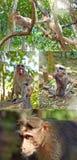 Πίθηκοι στην άγρια φύση Στοκ Εικόνες