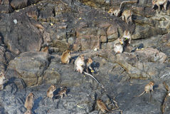 Πίθηκοι στην Ταϊλάνδη Στοκ εικόνες με δικαίωμα ελεύθερης χρήσης