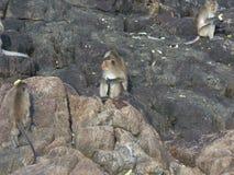 Πίθηκοι στην Ταϊλάνδη Στοκ Φωτογραφία