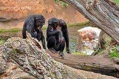 Πίθηκοι στοκ εικόνα