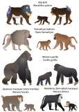 Πίθηκοι Απεικόνιση αποθεμάτων