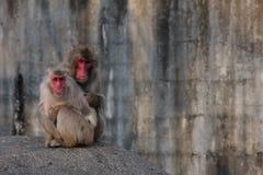 πίθηκοι Στοκ Φωτογραφίες