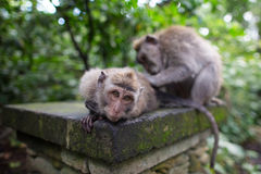 Πίθηκοι Στοκ εικόνα με δικαίωμα ελεύθερης χρήσης