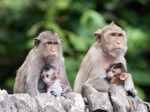 Πίθηκοι. Στοκ Φωτογραφία