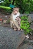 Πίθηκοι Στοκ φωτογραφίες με δικαίωμα ελεύθερης χρήσης