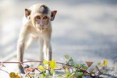 πίθηκος άτακτος στοκ εικόνα με δικαίωμα ελεύθερης χρήσης