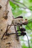 πίθηκος άτακτος στοκ εικόνα