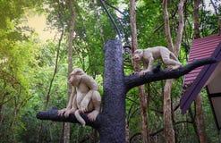 Πίθηκος αγαλμάτων Στοκ Εικόνα