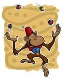 πίθηκος ζογκλέρ Στοκ Φωτογραφίες