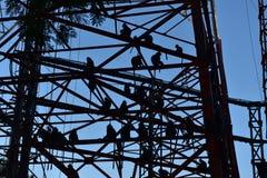 πίθηκος κήπων Στοκ φωτογραφία με δικαίωμα ελεύθερης χρήσης