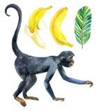 Πίθηκος και μπανάνα που απομονώνονται στο άσπρο υπόβαθρο Στοκ φωτογραφία με δικαίωμα ελεύθερης χρήσης
