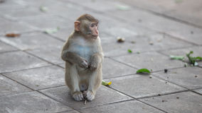 Πίθηκος και μωρό, πίθηκος Στοκ φωτογραφία με δικαίωμα ελεύθερης χρήσης