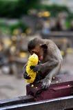 Πίθηκος κινηματογραφήσεων σε πρώτο πλάνο Στοκ Φωτογραφίες