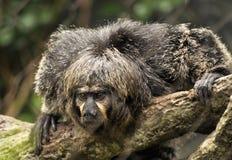πίθηκος κινηματογραφήσε στοκ φωτογραφίες με δικαίωμα ελεύθερης χρήσης