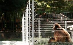 πίθηκος κλουβιών στοκ εικόνες