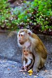Πίθηκος με ένα μωρό στο Hill πιθήκων Στοκ φωτογραφία με δικαίωμα ελεύθερης χρήσης