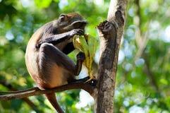 Πίθηκος με την μπανάνα στα ξύλα ένα έντρομο βλέμμα Στοκ εικόνα με δικαίωμα ελεύθερης χρήσης